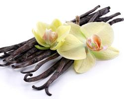 Ваниль — аромат и свойства