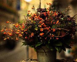 Осенний букет: правила оформления и цветы