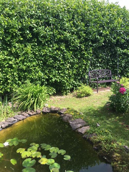 Садово-парковое искусство в разных стилях