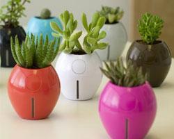 Посадочный календарь домашних растений