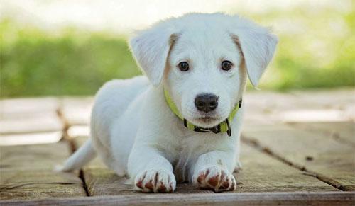 Правильно ухаживаем за своей собакой